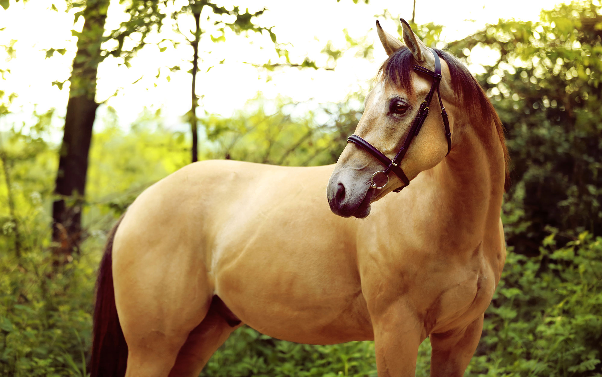 10 Facts on Horses' Hearing