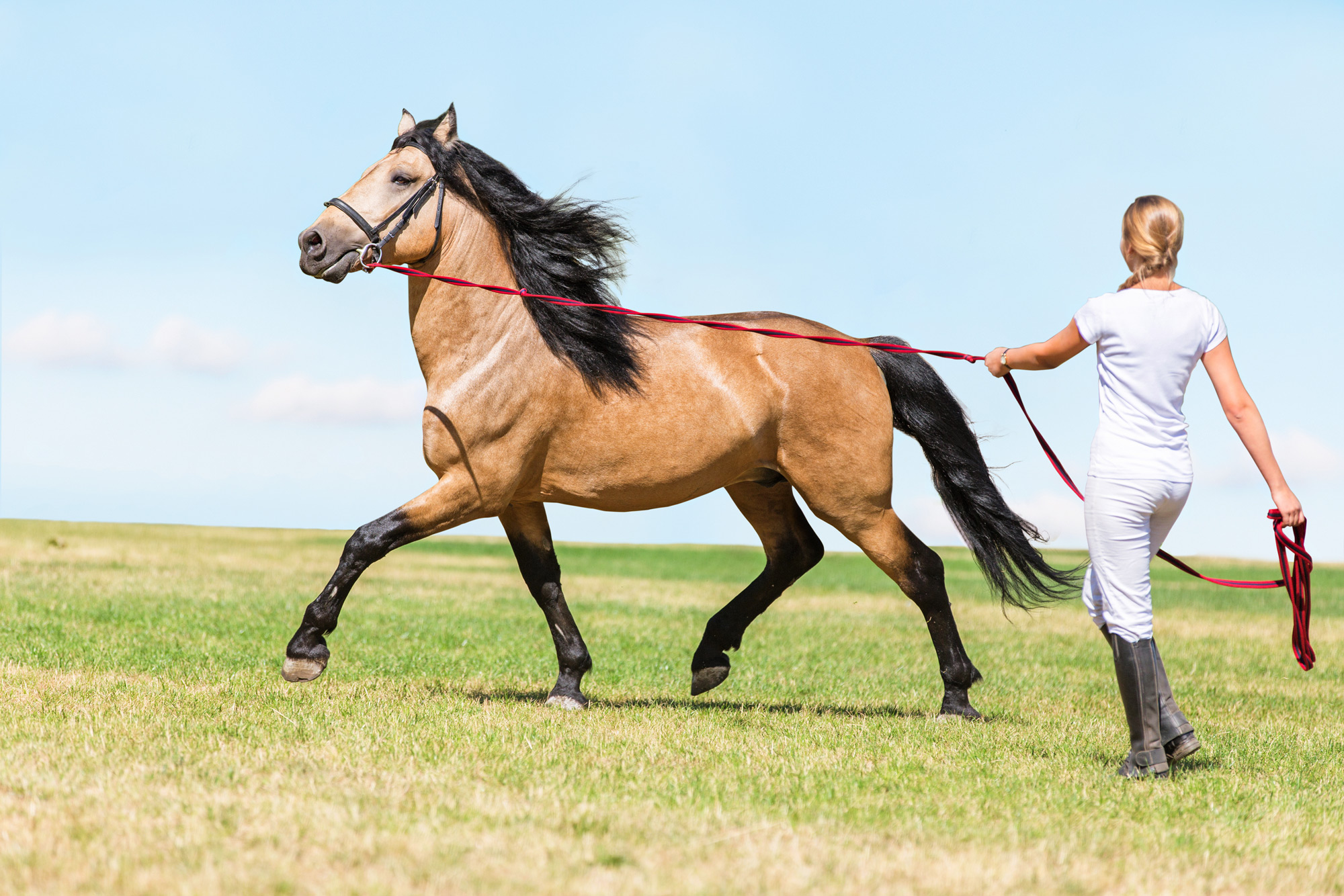 Why Lunge Your Horse