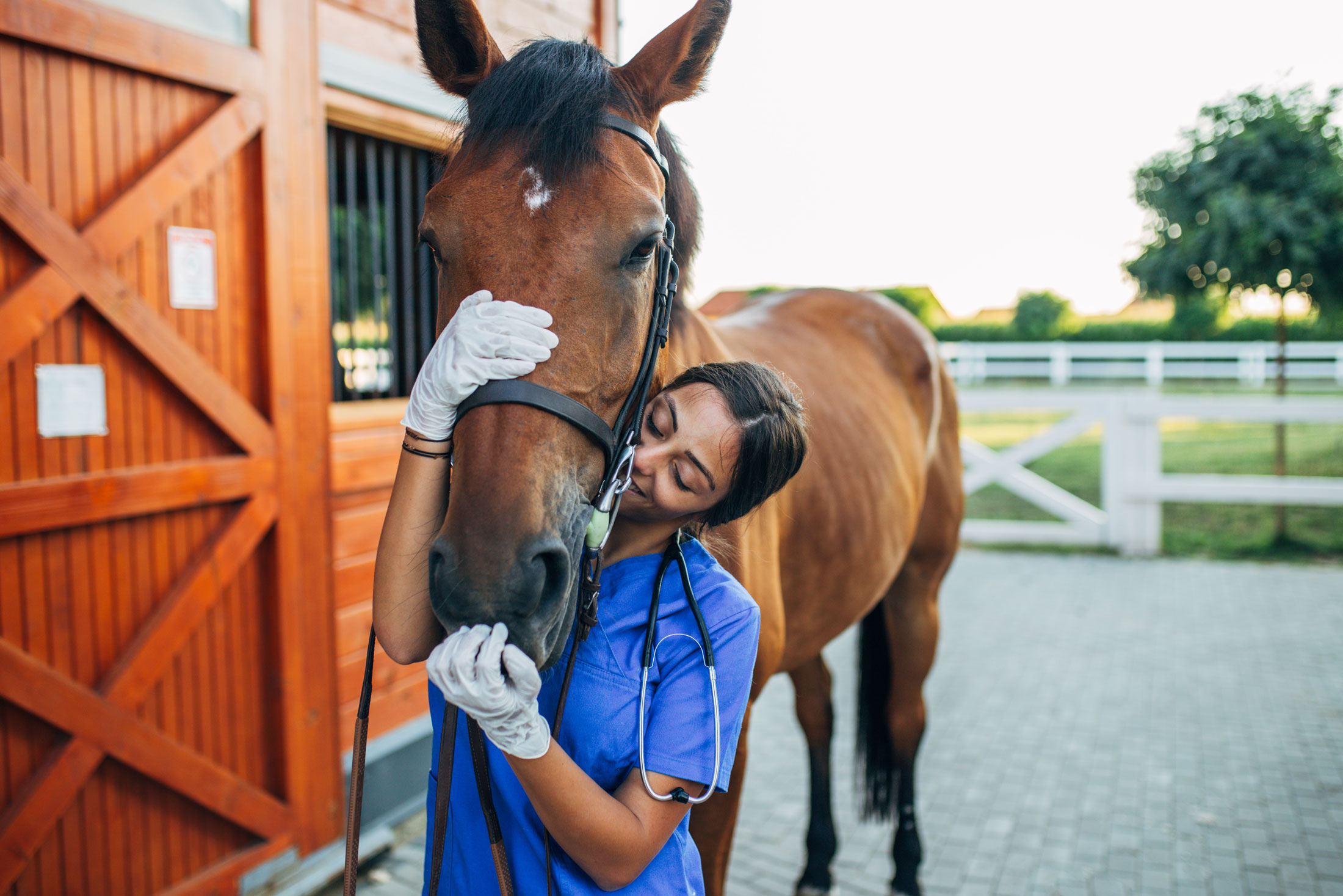 20 Non Riding Careers For Horse Lovers