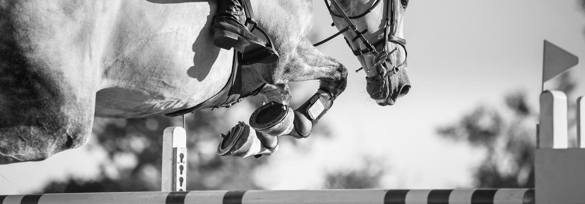 Horses Fei Org