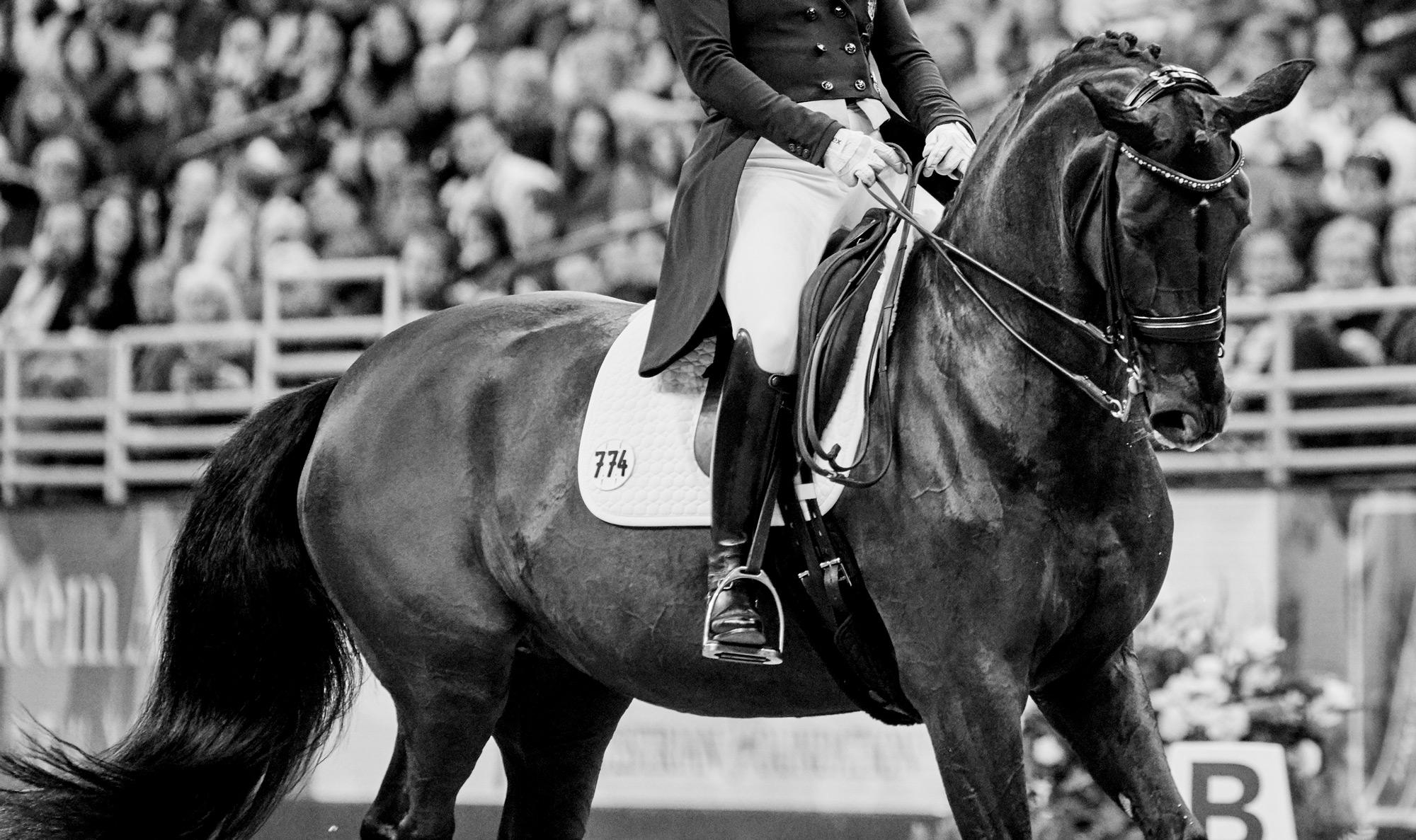 Aubepines Fei 1: Horse Of The Month: Weihegold Old